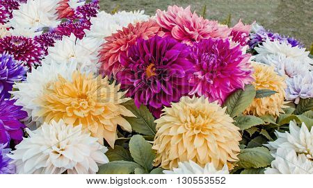 Various dahlias of different colors and green leaves.