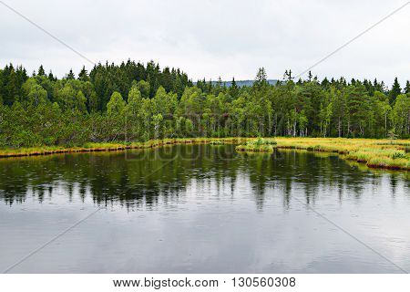 A peat bog in Sumava Czech Republic
