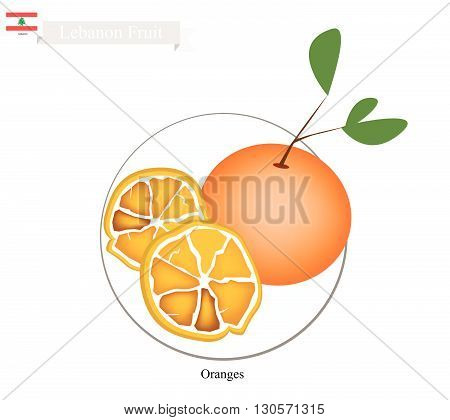 Lebanon Fruit Illustration of Orange. One of The Most Popular Fruits in Lebanon.