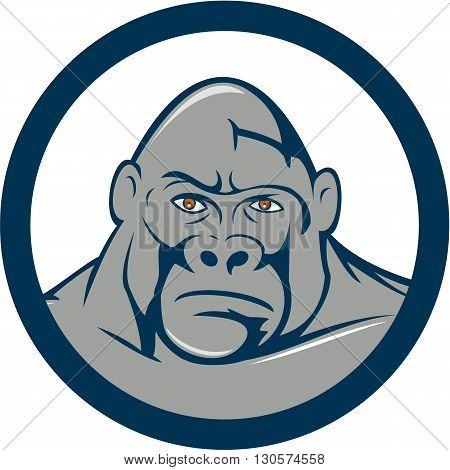 Illustration of an angry gorilla ape head viewed from front set inside circle on isolated background done in cartoon style.