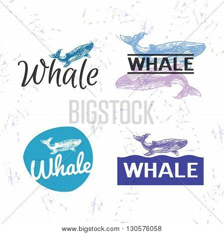 Vector colourful set with whale. The whale as main element of logotypes on white background