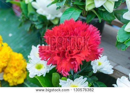 Carnation Flower Orange Color