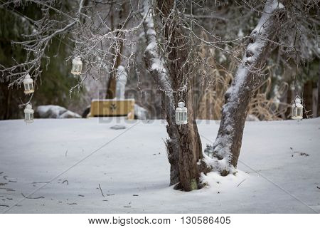 white lanterns on a icy tree in winter with snow
