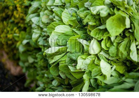 Selection of fresh green spinach. Traditional thai market.