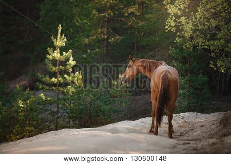 Red Horse Trotting In A Meadow