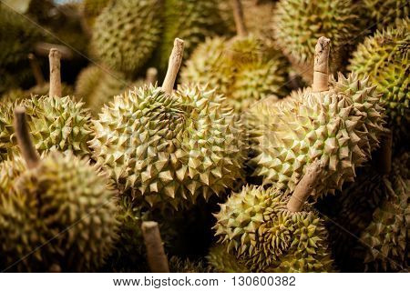 Selection of fresh durian fruits. Traditional thai market.