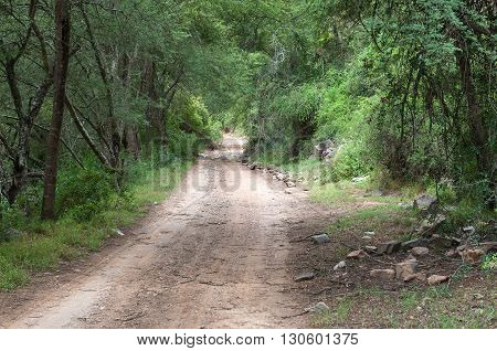 The road through the wilderness area in the Baviaanskloof (baboon valley) passes through dense forest