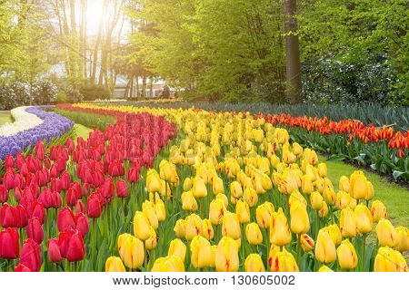 Beautiful bouquet of tulips. colorful tulips. tulips in spring