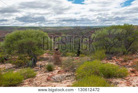 Animal habitat sand mound in the native bush of the Kalbarri National Park in Kalbarri, Western Australia.
