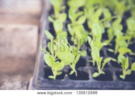 blur de-focused photo of young organic plants in nursery tray