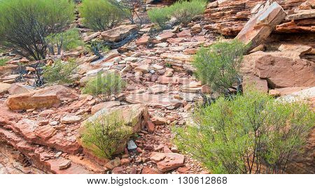Unique red sandstone formations with native flora in Kalbarri National Park in Kalbarri, Western Australia.