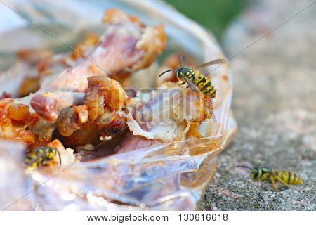 wild wasp and pieces of raw meat