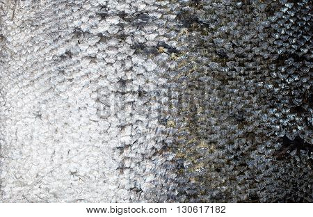 Fresh salmon skin background texture close up