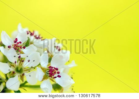 Branch With Blooming In Yellow