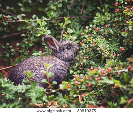 a cute little bunny eating berries off a branch in a local park