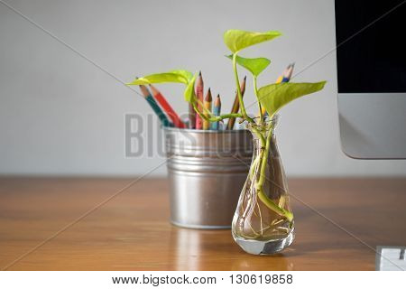 Golden Pothos or Devil's Ivy in the bottle of water with background of office desk.