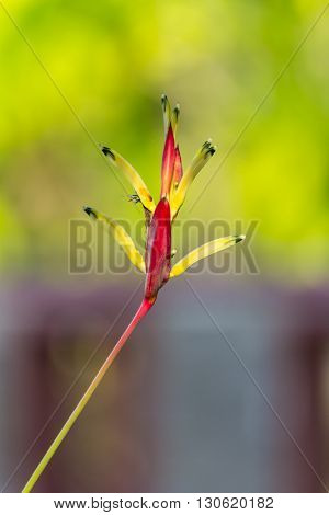 Bird of paradise, flower , beauty nature