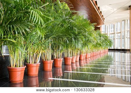 Long row of green tall plants in red pots inside a building lobby