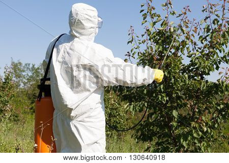 Fruit tree spraying with pesticides in the orchard