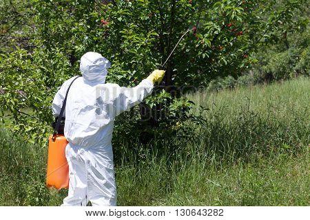 Pesticide spraying. Fruit tree spraying with pesticides in in the orchard