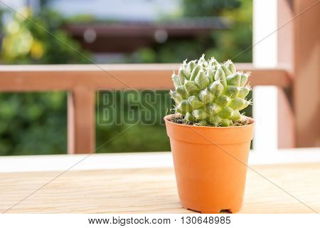 the cactus plant at the window with the sun light