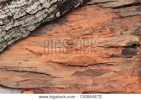 Tree Bark Texture. Skin The Bark Of A Tree That Traces Cracking.