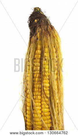 produce, raw corn isolated on white background