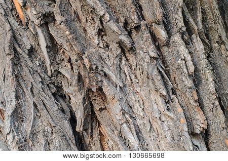 macro shot of an old tree bark