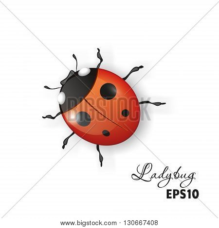 Ladybird on a white background.Vector image for design