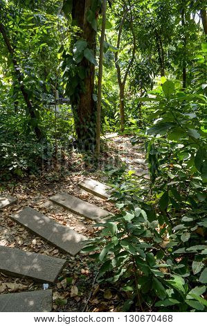 fresh green nature walkway in country forest Thailand