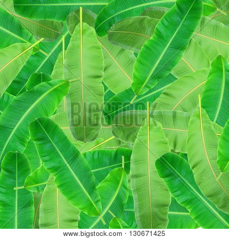 Green leaf of palm tree background and texture