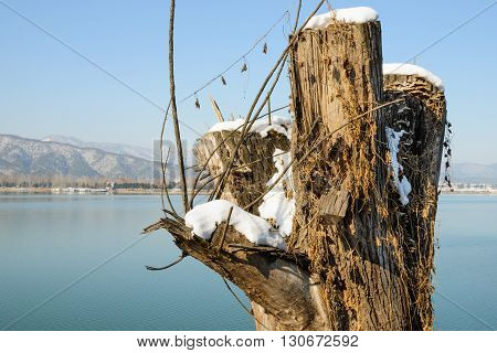 Old tree stump in front of the lake