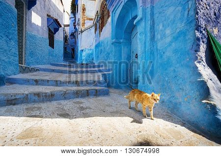 A cat in a street of Chefchaouen in Morocco.