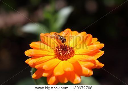 Nice macro photos of beautiful bright insects. Only in NATURAL environment.