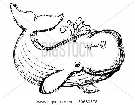 Whale Illustration.