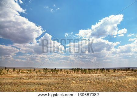 Scenic nature of dry steppe and trees. natural background