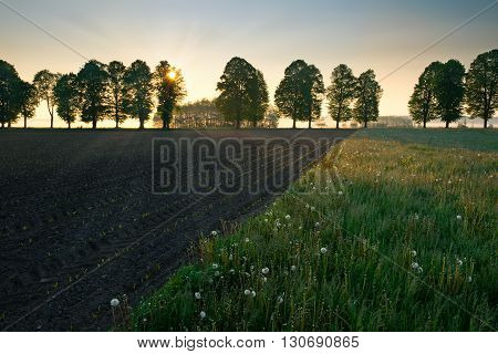 Spring countryside landscape. Sun riser over new green field. Masuria Poland.