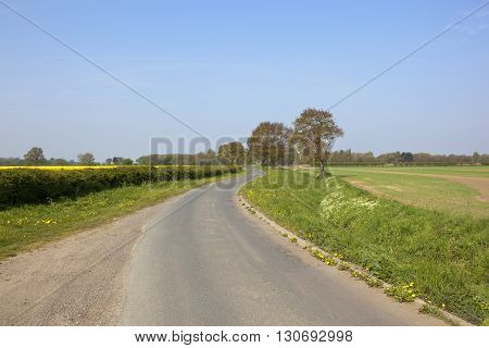 English Country Lane With Oak Trees