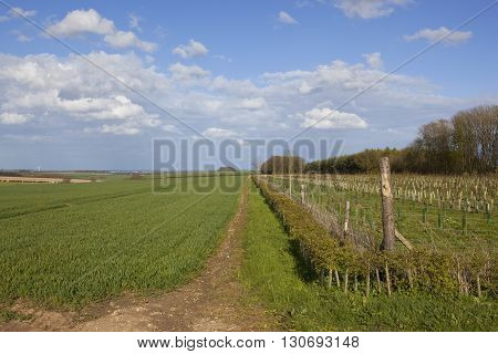 Small Plantation Beside Wheat Crops