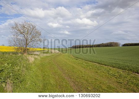 Scenic Footpath With Lone Ash Tree