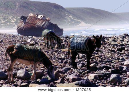 Morocco005