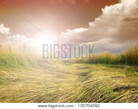 Long grass against a vibrant blue sky