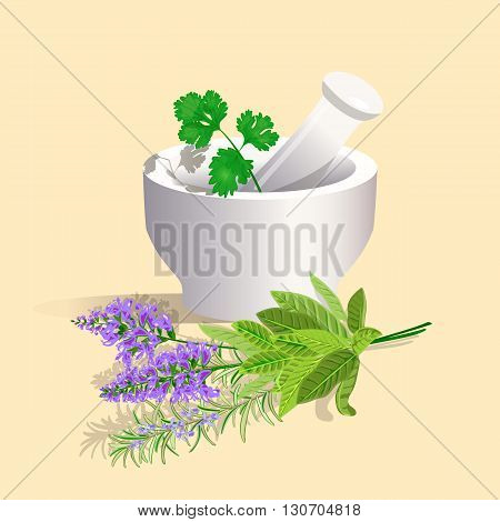 Mortar and Pestle with herbs. Vector illustration.