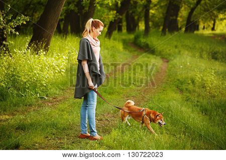 poster of Walk girl and dogs Shiba Inu in Spring Park. Walking with a pet. Pedigree dog. Dog walking.
