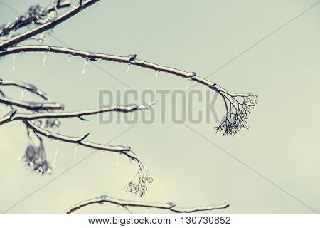 Frosty Winter Day. Hoarfrost, Ice Crystal On Tree