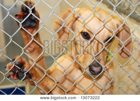 Dog Waiting for Adoption