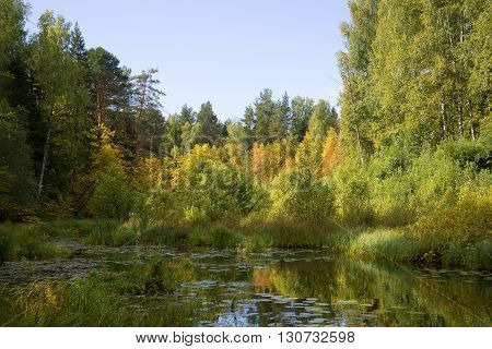 September in the backwaters of the river Meza. Kostroma region, Russia