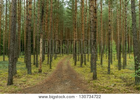 Small Path Through The Woods