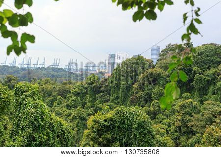 Thick Rainforest On Mount Faber And Port Skyline In Singapore