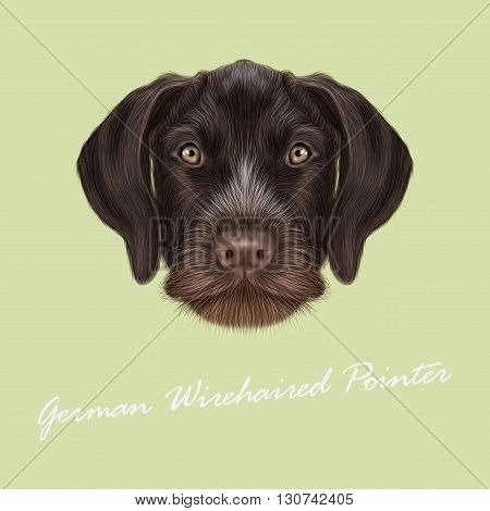 Vector Illustrated Portrait of German Wirehaired Pointer dog. Cute red face of hunting dog on yellow background.